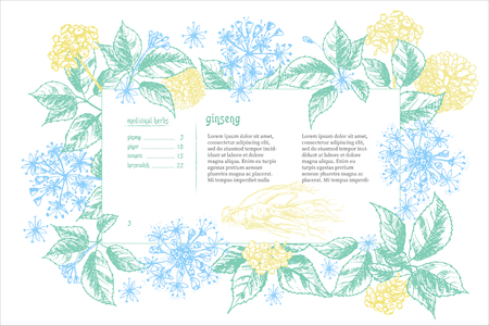 Realistic Botanical color ink sketch of ginseng root, flowers and berries isolated on white background Floral herbs collection Chinese medicine plant Banner design Vintage rustic vector illustration. Illustration