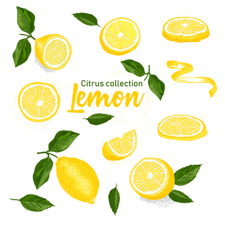 Color set of hand drawn tropical citrus fruit. Lemon. Ink sketch style. Good idea for templates menu, recipes, greeting cards. Vector illustration