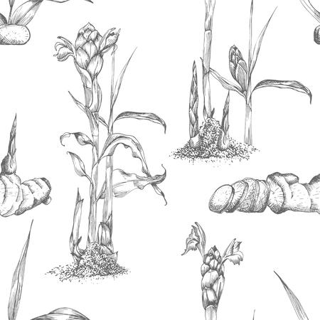 Nahtlose Muster handgezeichnet von Ingwerwurzeln, Leben und Blumen in schwarzer Farbe isoliert auf weißem Hintergrund. Retro-Vintage-Grafikdesign Botanische Skizzenzeichnung, Gravurstil. Vektor-Illustration. Vektorgrafik