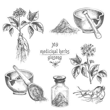 Realistic Botanical ink sketch of ginseng root, flowers, berries, bottle, mortar and pestle isolated on white background, floral herbs collection. Medicine plant. Vintage rustic vector illustration.
