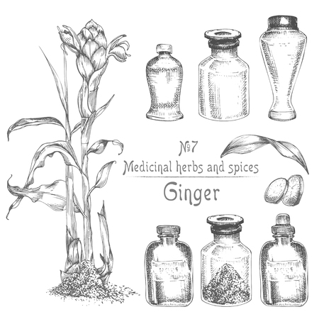 Set hand drawn of Ginger roots, lives and flowers in black color isolated on white. Bottle, mortar, pestle Retro vintage graphic design. botanical sketch drawing, engraving style. Vector illustration.