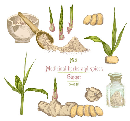 Set colorful hand drawn of Ginger roots, lives and flowers isolated on white. Bottle, mortar, pestle Retro vintage graphic design. botanical sketch drawing, engraving style. Vector illustration.