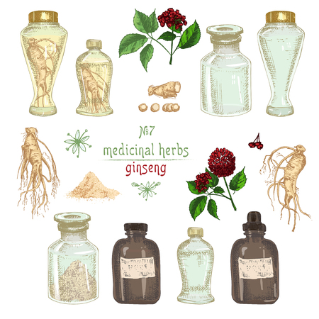 Realistic Botanical colorful sketch of ginseng root, flowers, berries, bottle, mortar and pestle isolated on white background, floral herbs collection Medicine plant Vintage rustic vector illustration