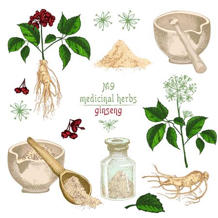 Schizzo colorato botanico realistico di radice di ginseng, fiori, bacche, bottiglia, mortaio e pestello isolato su sfondo bianco, raccolta di erbe floreali Pianta medicinale Illustrazione vettoriale vintage rustico