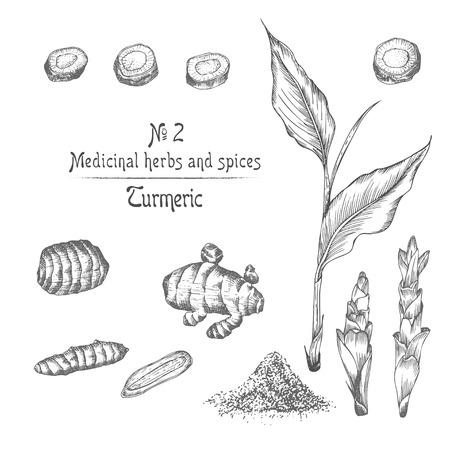 Définir à la main des racines de curcuma, des vies et des fleurs de couleur noire isolées sur fond blanc. Conception graphique rétro vintage. Dessin d'esquisse botanique, style de gravure. Illustration vectorielle.