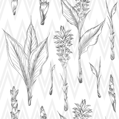 Seamless pattern with hand drawn of Turmeric roots, lives and flowers in black color isolated on white. Retro vintage graphic design. Botanical sketch drawing, engraving style. Vector illustration. Ilustracja