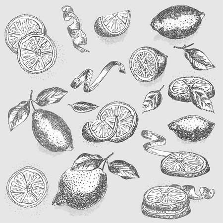Set of hand drawn half, quarter, slices and zest lemon fruit in black color on gray background. Retro vintage graphic design Botanical sketch drawing, engraving style. Vector illustration.