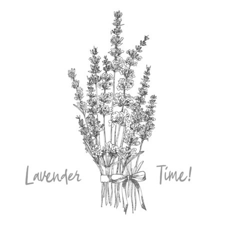 Bouquet of hand drawn sketch of Lavender flower and cute bows isolated on white background. France provence retro pattern for romantic fresh design concept Natural lavander Vintage vector illustration