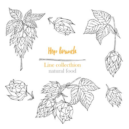Set of botany hand drawn sketch hop isolated on white background. Line drawing. Herbal frame. Natural food collection. Vintage vector illustration.