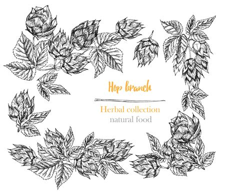Set of botany hand drawn sketch hop borders and frames isolated on white background. Line drawing. Herbal frame. Natural food collection. Vintage vector illustration.