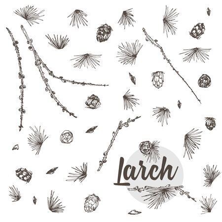 Set ink hand drawn sketch illustration of larch branches, cones isolated on white background For vintage Merry christmas card, new year conifer tree pattern or decorative design Engraving style