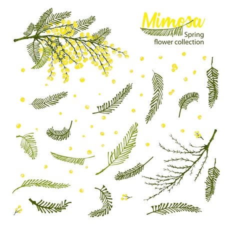 Set of hand-drawn sketch elements for create branches of mimosa flower in yellow and green color Engraving style Good idea for your design poster, 8 march greeting card, web banner Vector illustration Ilustração