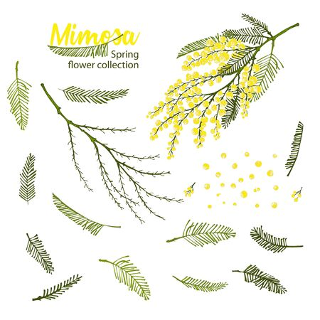 Set of hand-drawn sketch elements for create branches of mimosa flower in yellow and green color Engraving style Good idea for your design poster, 8 march greeting card, web banner Vector illustration