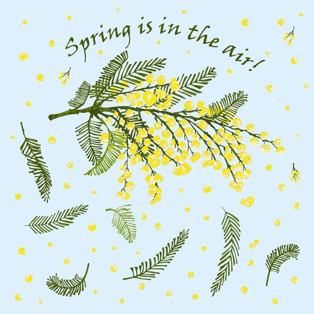 Hand-drawn sketch branch of mimosa flower in yellow and green color Engraving style Good idea for your design women days poster, 8 march greeting card, web banner Vector illustration Ilustração