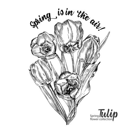 Spring flower bouquet of tulips on white background. Line engraving drawing style. Realistic botanical nature floral sketch pattern for wedding greeting art decoration design. Vector illustration Ilustração