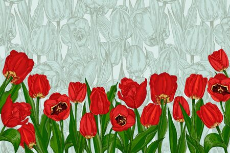 Greeting vintage background with Spring flower tulips in red and green colors. Horizontal seamless border Engraving vintage style Realistic botanical nature sketch 免版税图像 - 140289635
