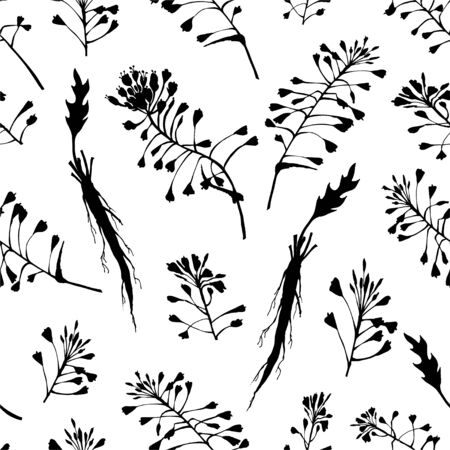 Seamless pattern with black hand drawn silhouette of Shepherds Purse, lives and flowers isolated on white background. Retro vintage graphic design. Botanical drawing, Vector illustration.