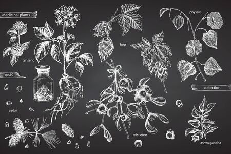 Set vintage hand drawn sketch medicine herbs elements isolated on black chalk board background. Cedar, mistletoe, hop, physalis, ashwagandha, ginseng. Graphic vector illustration art.
