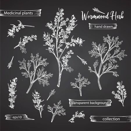 Set hand drawn of wormwood root, lives and flowers in white chalk style isolated on black background. Retro vintage graphic design. Botanical sketch drawing, engraving style Vector illustration