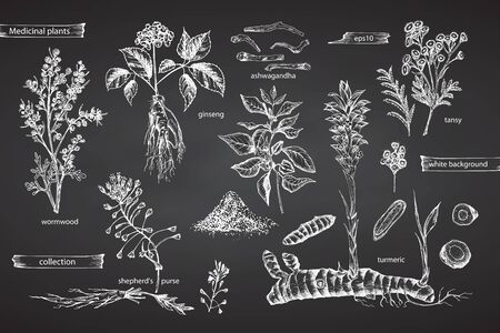 Set vintage hand drawn sketch medicine herbs elements isolated on black chalk board background. Wormwood, turmeric, tansy, ashwagandha, shepherds, purse, ginseng. Graphic vector illustration art. Vetores