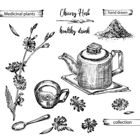 Realistic Botanical ink sketch of chicory root, flowers, powder, teapot, tea cup and spoon isolated on white background, floral herbs collection. Medicine plant. Vintage rustic vector illustration Vektorgrafik