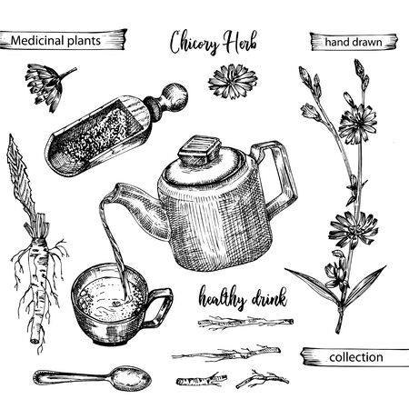 Realistic Botanical ink sketch of chicory root, flowers, powder, teapot, tea cup and spoon isolated on white background, floral herbs collection. Medicine plant. Vintage rustic vector illustration