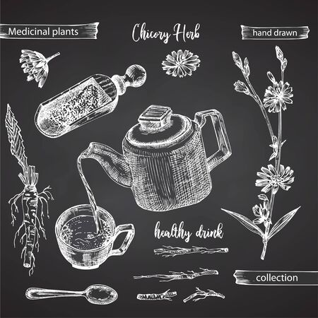 Realistic Botanical ink sketch of chicory root, flowers, powder, teapot, tea cup and spoon isolated on chalkboard background, floral herbs collection Medicine plant. Vintage rustic vector illustration Ilustracja