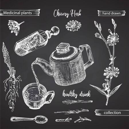 Realistische botanische Tintenskizze von Chicorée-Wurzel, Blumen, Pulver, Teekanne, Teetasse und Löffel einzeln auf Tafelhintergrund, Blumenkräutersammlung Medizinpflanze. Vintage rustikale Vektorillustration