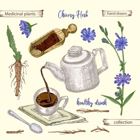 Realistic Botanical color sketch of chicory root, flowers, powder, teapot, tea cup and spoon isolated on yellow background, floral herbs collection. Medicine plant. Vintage rustic vector illustration Ilustracja