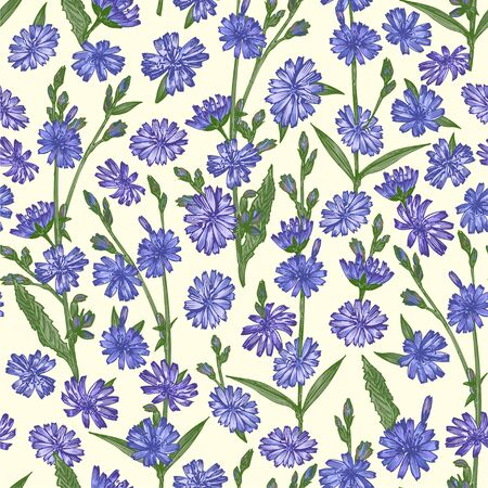 Seamless pattern with Realistic Botanical color sketch of chicory flowers, isolated on yellow background, floral herbs collection. Medicine plant. Vintage rustic vector illustration Zdjęcie Seryjne - 144860723
