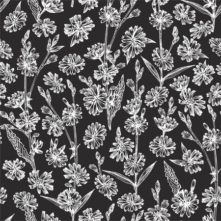 Seamless pattern with Realistic Botanical chalk sketch of chicory flowers, isolated on chalkboard background, floral herbs collection. Medicine plant. Vintage rustic vector illustration Ilustracja