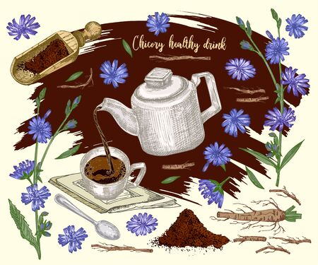 label, card, sticker with Realistic Botanical color sketch of chicory flowers, powder, teapot, tea cup and spoon isolated on brown background, Herbs medicine plant. Vintage rustic vector illustration Ilustracja