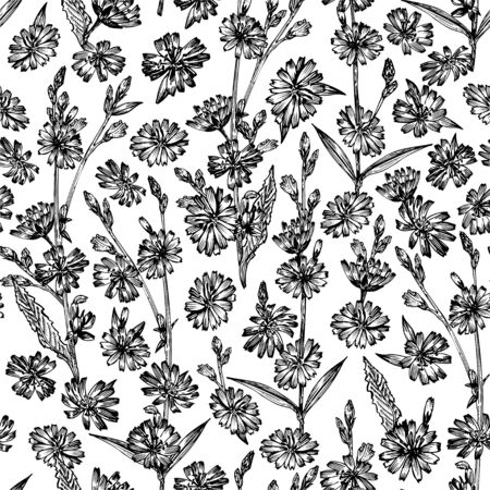 Seamless pattern with Realistic Botanical black ink sketch of chicory flowers, isolated on white background, floral herbs collection. Medicine plant. Vintage rustic vector illustration