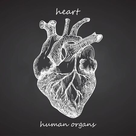 Heart. Realistic hand-drawn icon of human internal organs on chalkboard. Engraving art. Sketch style. Design concept for your medical projects post viral rehabilitation posters, tattoos. Vector