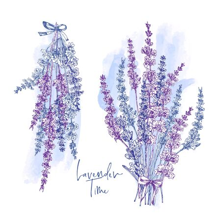 Cute card with of hand drawn sketch of Lavender flower and small bow isolated on white background. France retro pattern for romantic design concept. Text Lavender time Vintage vector illustration.  イラスト・ベクター素材