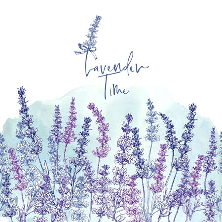 Cute card with of hand drawn sketch of Lavender flower and small bow isolated on white background. France retro pattern for romantic design concept. Text Lavender time Vintage vector illustration. Ilustración de vector