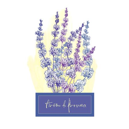 Cute card with of hand drawn sketch of Lavender flower and small bow isolated on white background. France retro pattern for romantic design concept. Text Aroma of Provence Vintage vector illustration.