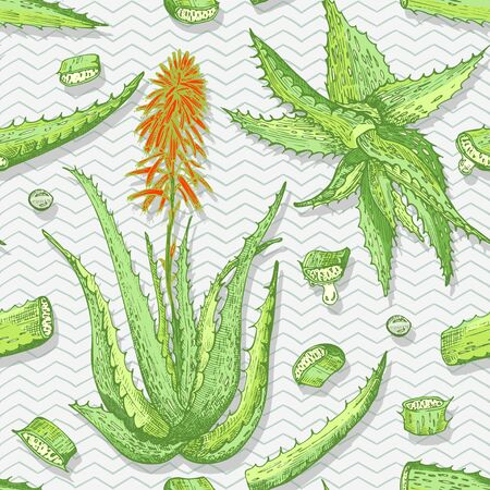 Seamless pattern with hand drawn Aloe vera lives and flower in green and red color on gray chevron background. Retro vintage engraving graphic design Botanical sketch drawing, Vector illustration.