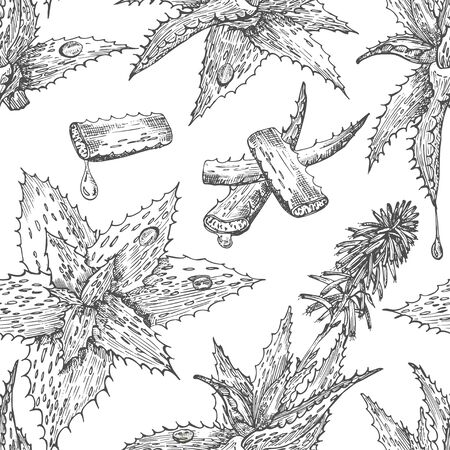 Seamless pattern with hand drawn Aloe vera lives and flower in black color isolated on white background. Retro vintage engaving graphic design Botanical sketch drawing, Vector illustration.