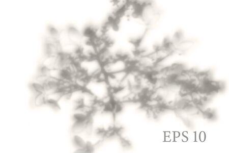 Transparent natural sakura tree branch shadow. Light effect overlay. Mesh grid. Presentation your design card, poster, stories Photo realistic vector illustration