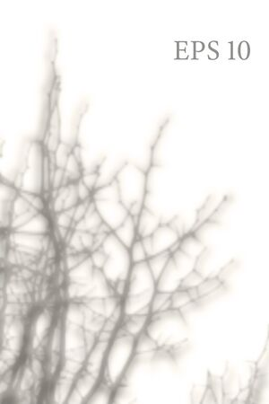 Transparent natural tree branches shadow. Light effect overlay. Mesh grid. Presentation your design card, poster, stories Photo realistic vector illustration