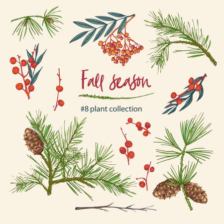 Set of twigs, berries, and leaves of autumn plant. Hand-drawn vintage sketch botanical illustration. Engraving style. Pure organic eco herbs Flat color vector isolated on beige background. Ilustração