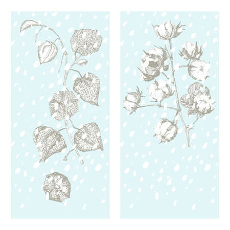 Set christmas new year card with cotton and physalis Winter plants isolated on blue snow background. Hand-drawn vintage sketch botanical art. Engraving style. Flat color Vector illustration