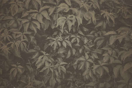 Fine art Vintage Plant texture. Grunge nature grass abstract background. Trendy overlay  backdrop for create cute family photo, atmospheric child portraits and loving humans