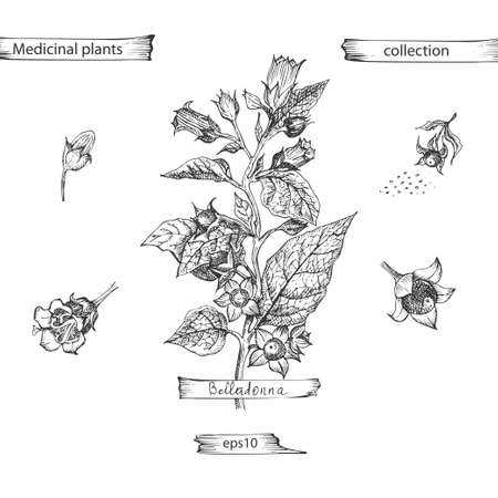 Set hand drawn of Belladonna, lives and flowers in black color isolated on white background. Retro vintage graphic design. Botanical sketch drawing, engraving style. Vector . Ilustração