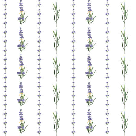 Seamless pattern with violet Lavender beautiful flower template in vector watercolor style isolated on white background for wedding card, invitation, travel flayer. Botanical illustration. Imagens