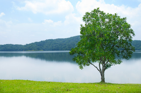 gorgeus: gorgeus landscape with lonely tree, perfect background Stock Photo