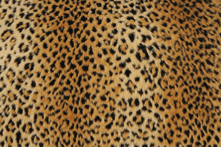 animal skin: close-up of leopard skin