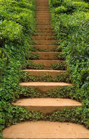 the thicket: A staircase in a greenery outdoors thicket
