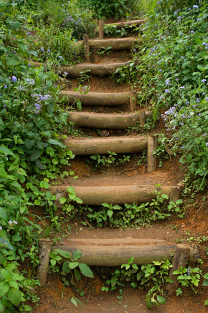the thicket: A staircase in a thicket and sprinkled with flowers in purple Stock Photo